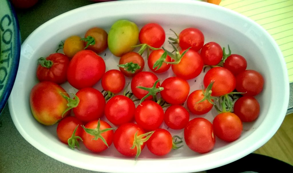 2016-last-gasp-cherry-tomatoes