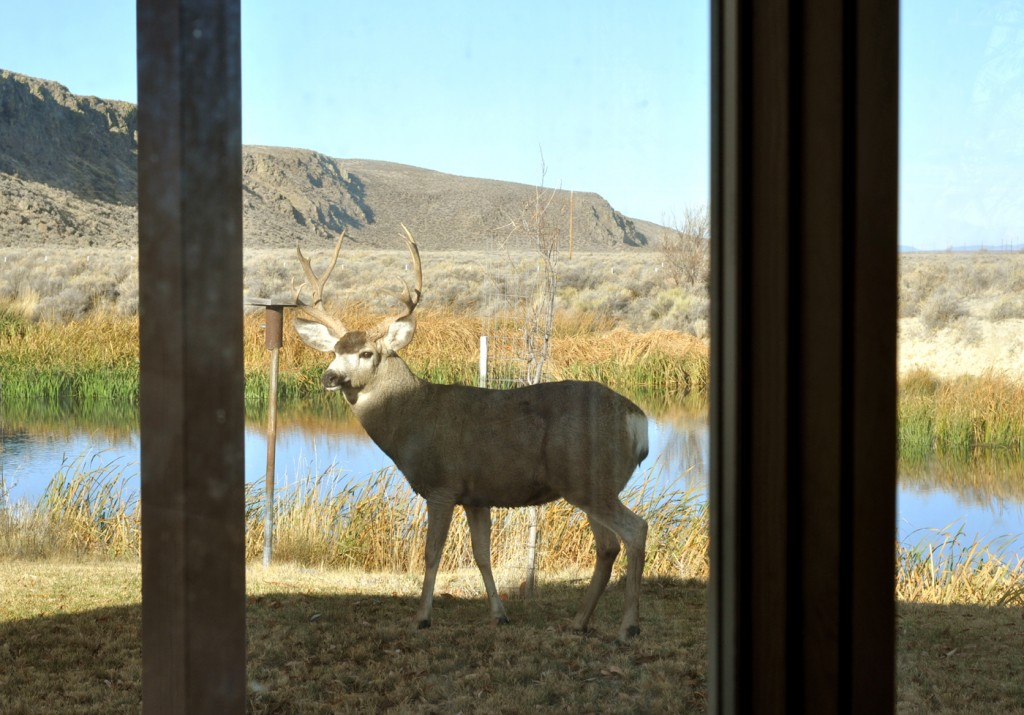 Deer window